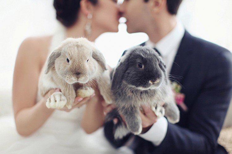 9 ADORABLY CUTE PETS AT WEDDINGS